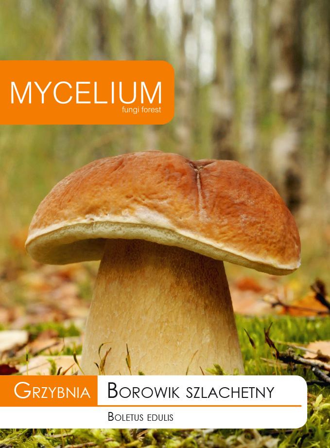 Мицелий подберезовик, настоящие грибы, шампиньоны