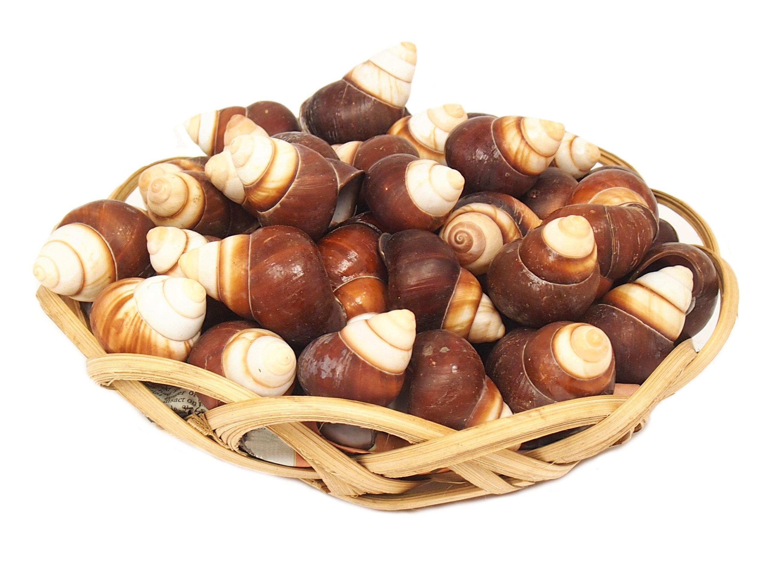 Seaškrtné more Shell Decoration Basket 75ks 0.5kg