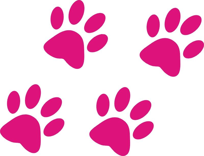 картинка отпечатка кошачьей лапки эти красивых