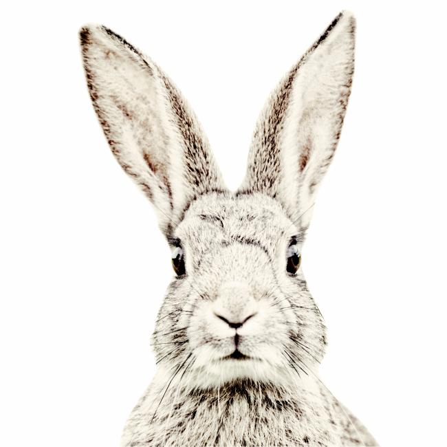отношением черно белая картинка на телефон кролик в лунку один