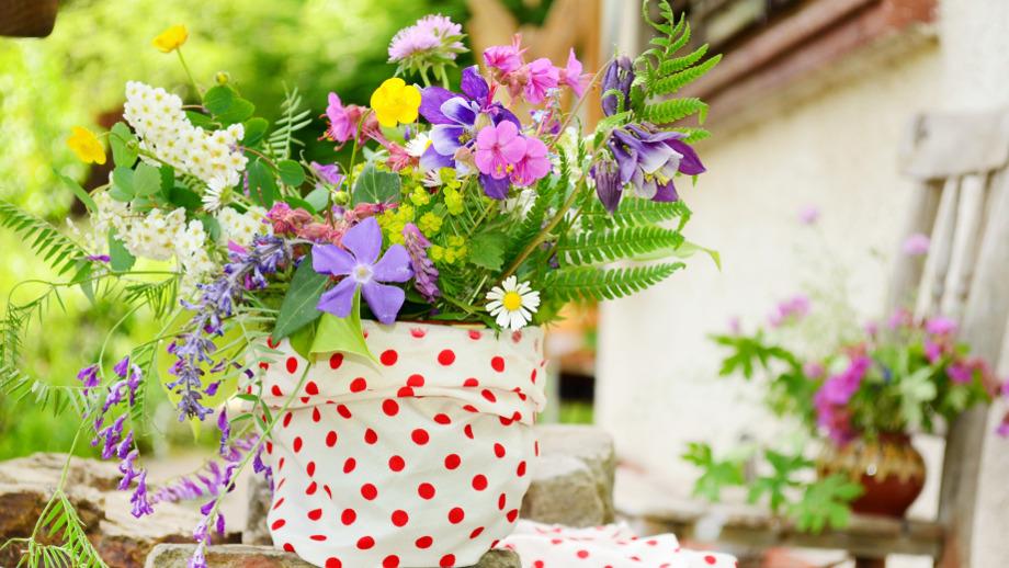 Jak Walczyć Ze Szkodnikami Kwiatów Doniczkowych Allegropl