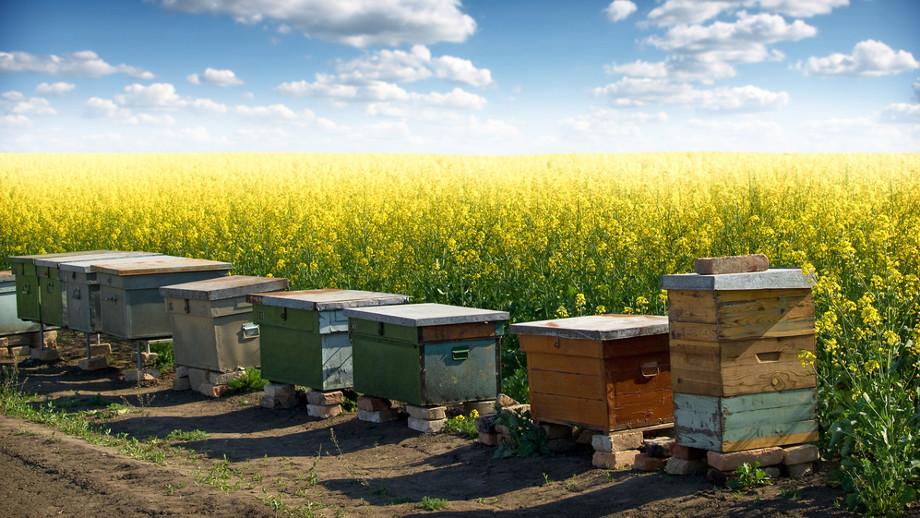 Hodowla pszczół i hotele dla owadów
