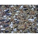 Deli nature M-69 papuga średnia: Nimfy, Rozelle