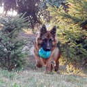 PIŁKA dużego psa KONG Jumbler 14cm APORT EAN 035585452005