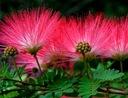 цветы ГОРЯТ В НОЧИ ALBICJA ШЕЛКОВЫЕ ЕЛКА 40см