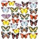 Termofolia do Sospeso - Little Butterfly