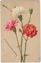 Imieniny kwiaty (1910)