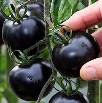 Черный Помидор BLACK CHERRY Сладкий Коктейль доставка товаров из Польши и Allegro на русском