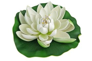 Lekný kvet jazierka biely, dekoratívny