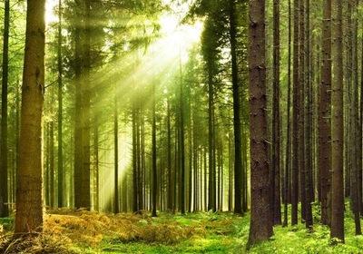 Tapety 3D Lesných Stromov Lesných 400x280 RC
